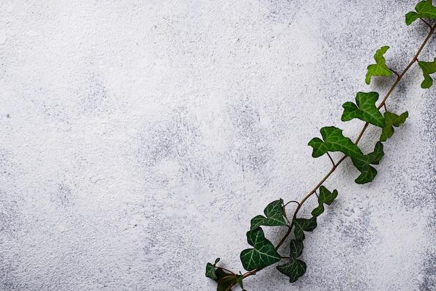 Plante verte sur fond clair