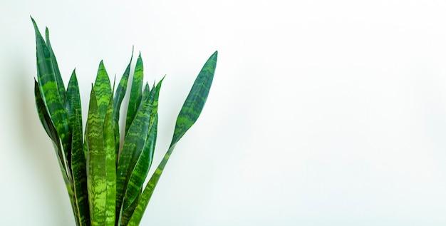 Plante verte isolée sur fond blanc