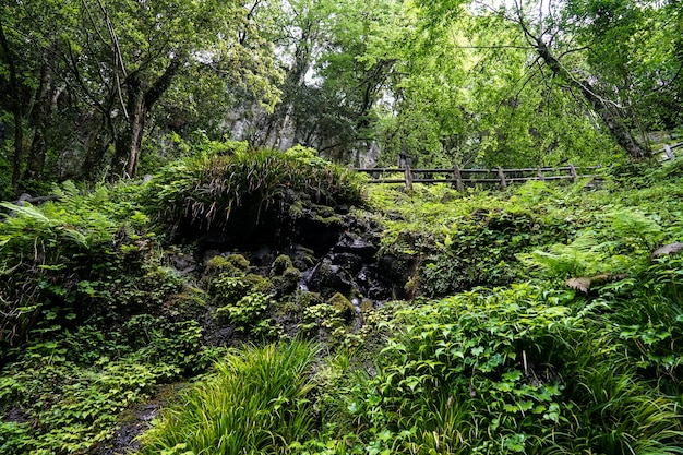 Plante verte luxuriante, arbres, mousse et lichen sur paroi rocheuse avec chute d'eau dégoulinant en japonais