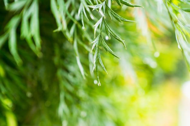 Plante verte naturelle avec des gouttelettes de pluie le matin pour le printemps fond, printemps