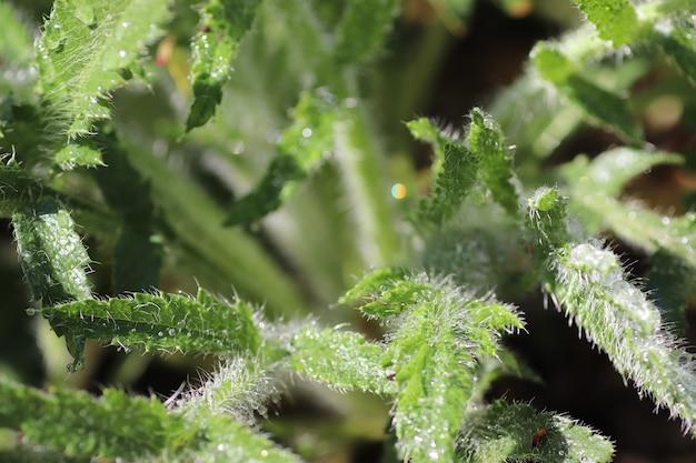 Plante verte par une journée ensoleillée sous la pluie feuilles humides près du sol d'herbe et de fleurs congé frais