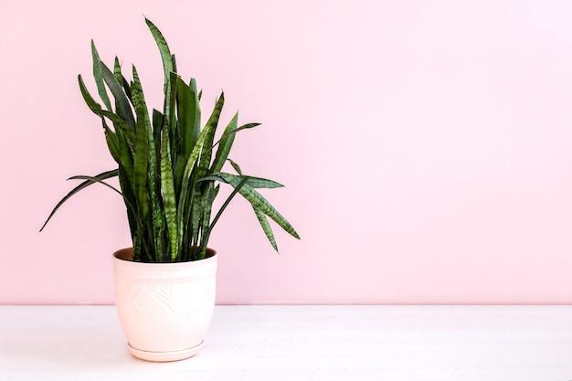 Plante verte en pot sur mur rose
