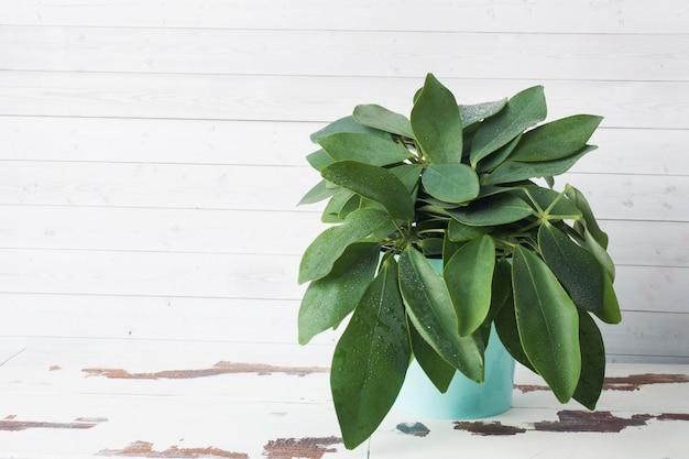 Plante verte en pot sur un tableau blanc avec espace de copie.
