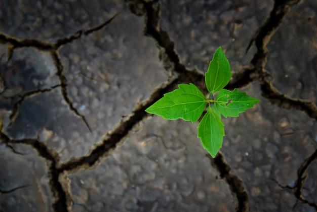 Plante verte poussant dans un sol mort.
