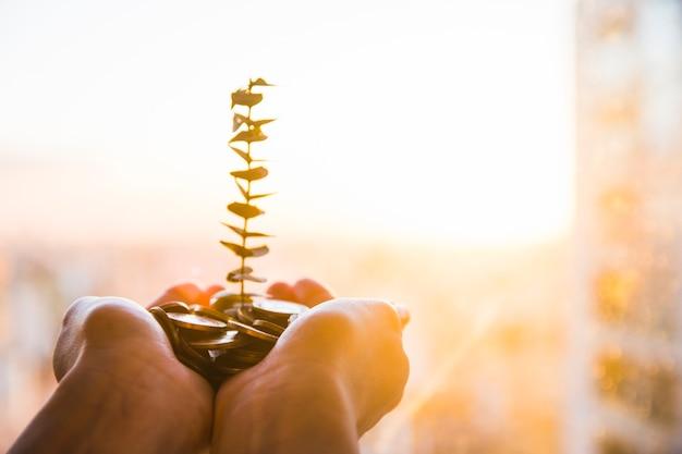 Plante verte poussant à partir de pièces de monnaie