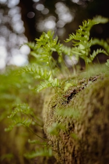 Plante verte sur sol brun