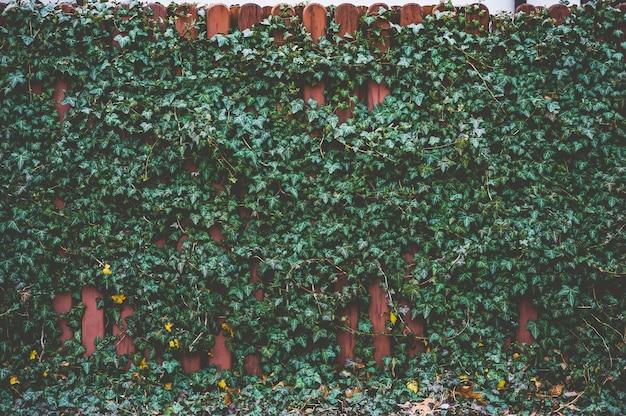 Une plante verte tisse sur une clôture en bois marron.