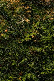 Plante verte vue à travers une clôture à mailles losangées