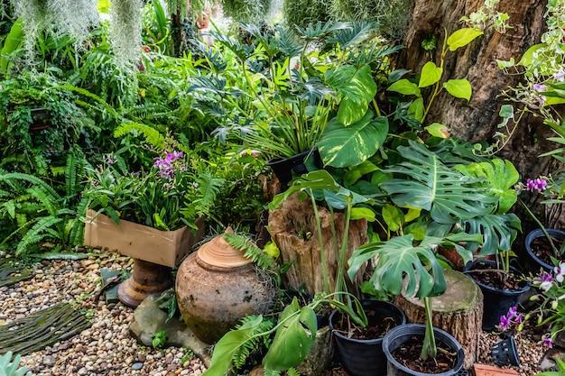 Planter un arbre décorer dans le jardin