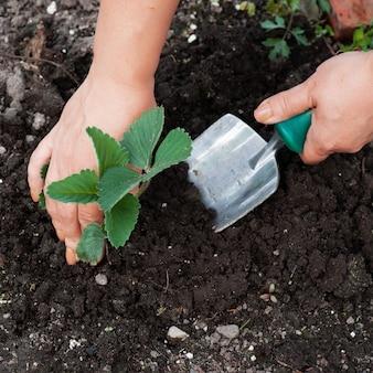 Planter un arbre de semis