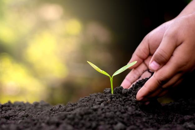 Planter un arbre.