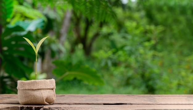 Planter des arbres dans des pots en tissu