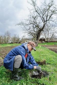 Planter des arbres fruitiers.