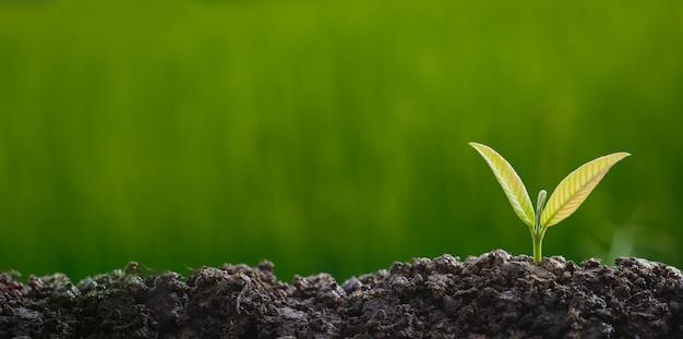 Planter des arbres pour pousser dans le sol sur fond de verdure