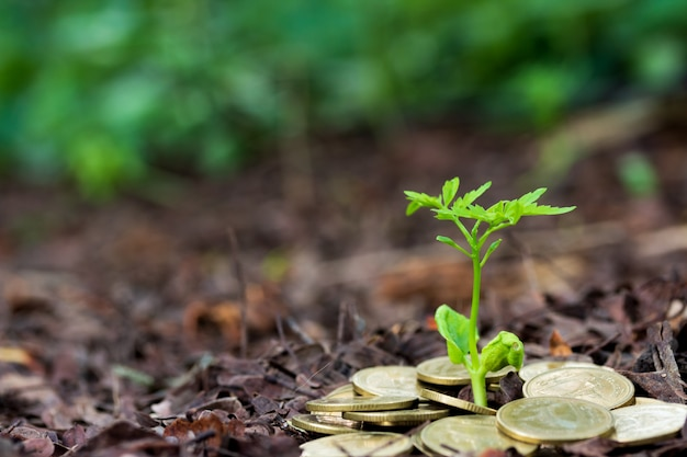 Planter des arbres qui poussent dans le jardin, financer des intérêts coin jeune plante