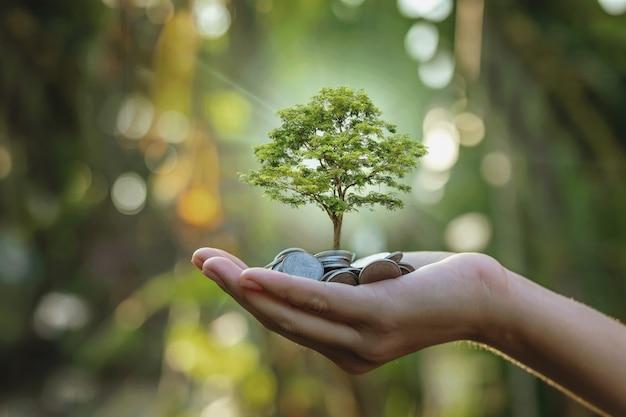 Planter des cultures sur un tas de pièces de monnaie en main concepts d'investissement dans les affaires