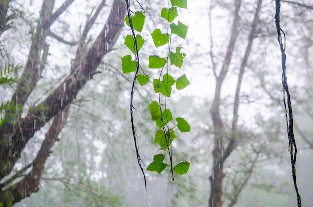 Planter dans la forêt tropicale humide