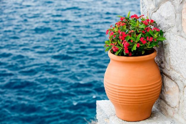 Planter dans le pot