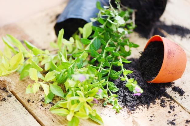 Planter des fleurs en pot avec de la terre sur des œuvres en bois de petits outils de jardinage