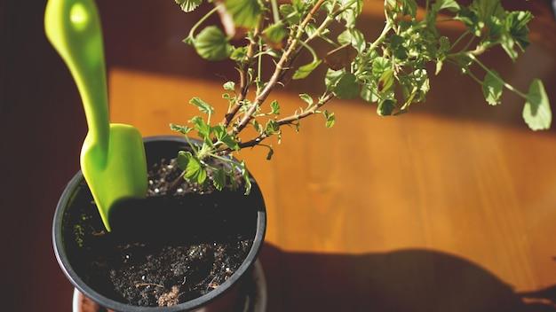 Planter un jardin fleuri. plantes en pot formant une belle fleur de composition sur le rebord de la fenêtre