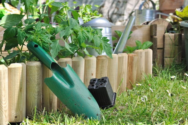 Planter des légumes dans le jardin