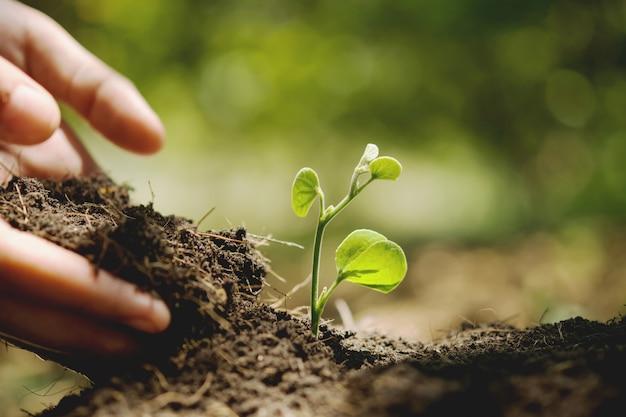 Planter à la main dans le jardin. concept de jour de la terre