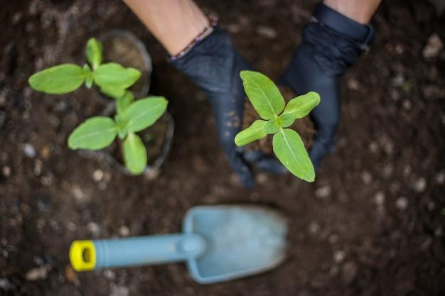 Planter de nouveaux jeunes arbres