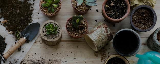 Planter des plantes cactus sol pierres sur une table en bois
