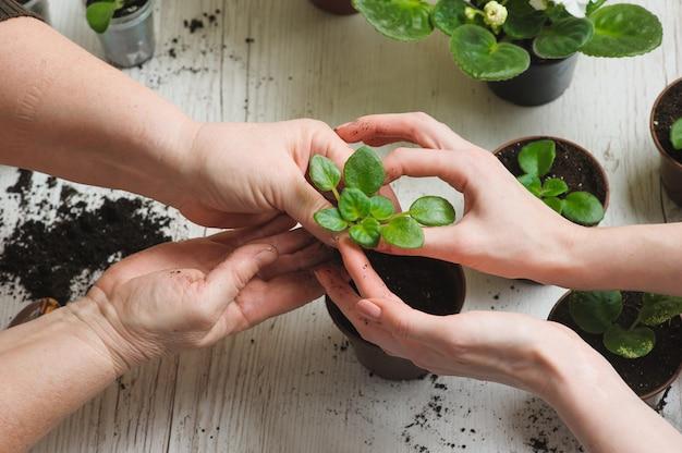 Planter des plantes d'intérieur à l'intérieur
