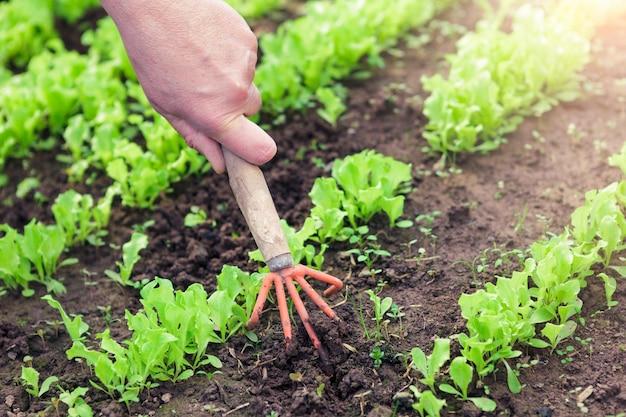 Planter des semis dans un jardin. mains de femme et petites pousses.