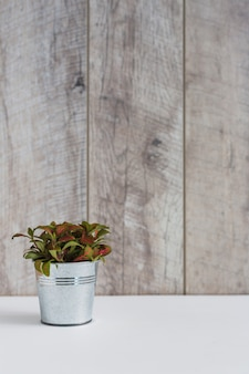 Plantes en aluminium sur un bureau blanc contre un mur en bois