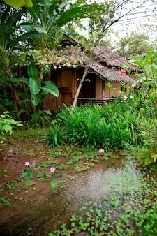 Plantes aquatiques, thaïlande
