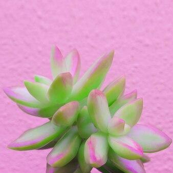 Plantes sur l'art conceptuel de la mode rose. aloe cactus vert sur mur rose. tendance de conception de couleurs