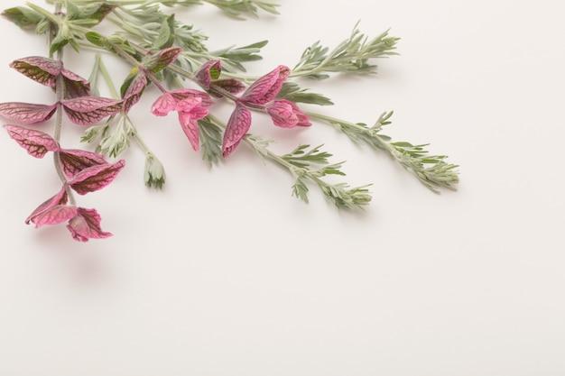 Plantes sur blanc