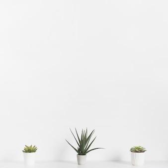 Plantes de bureau dans des pots de fleurs