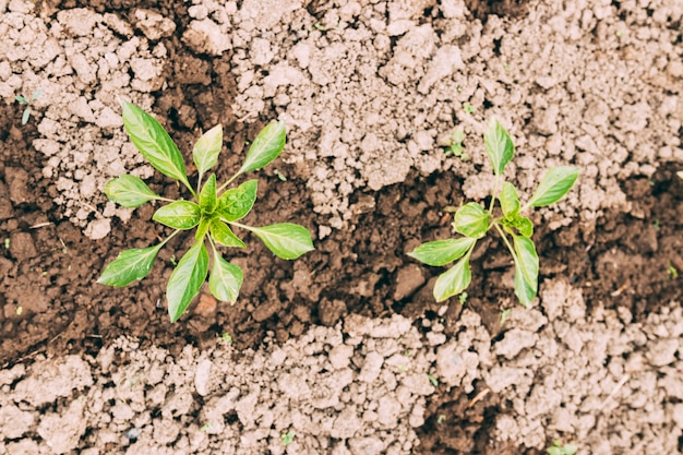 Plantes close-up dans un sol humide