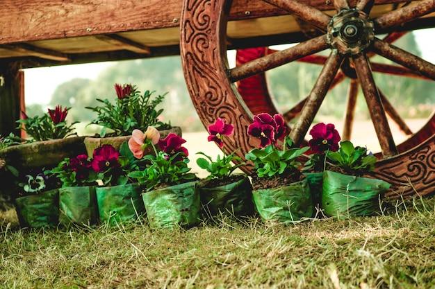 Plantes colorées en pot