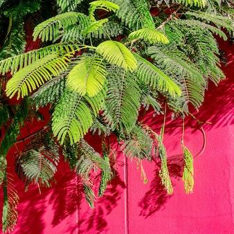 Plantes sur concept rose. plante tropicale