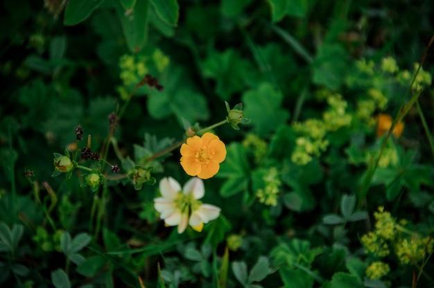 Plantes de couleur blanche et jaune poussant sur l'herbe verte sur le terrain