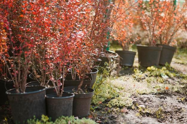 Des plantes dans leurs pots