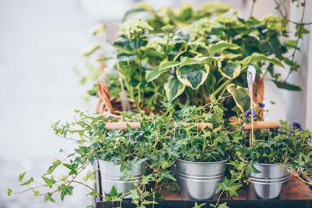 Plantes dans les pots posés sur la table