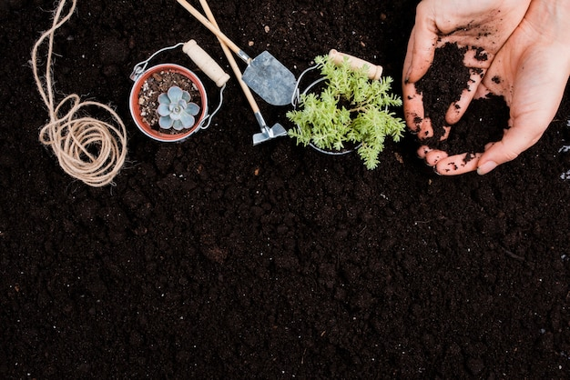 Plantes dans des seaux avec espace de copie