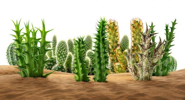 Plantes du désert sur le sable