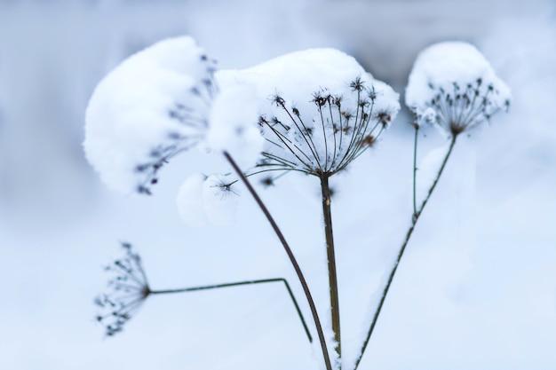 Les plantes du parc sont couvertes de givre et de neige texture froide de la glaçure
