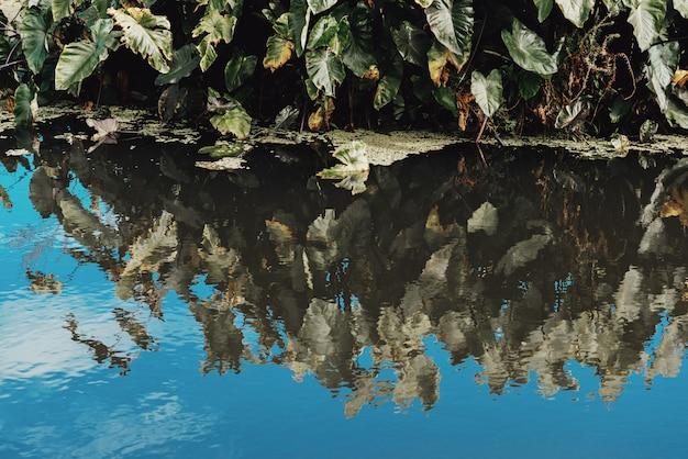 Des plantes d'eau verte et des reflets dans l'eau.
