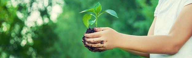 Plantes enfants et arrosage des plantes dans le jardin.