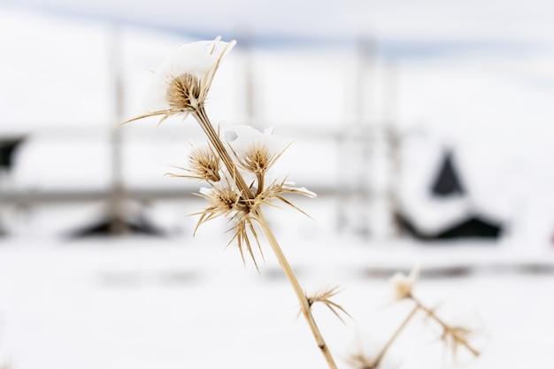 Plantes enneigées dans la station de ski de la sierra nevada