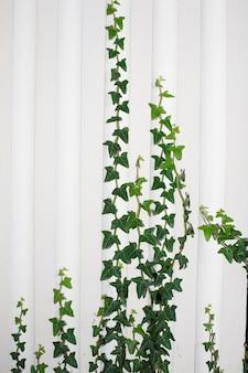 Plantes d'escalade