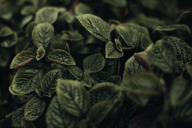 Plantes exotiques vertes fraîches poussant dans la nature. fond naturel. texture organique en détail. verticale