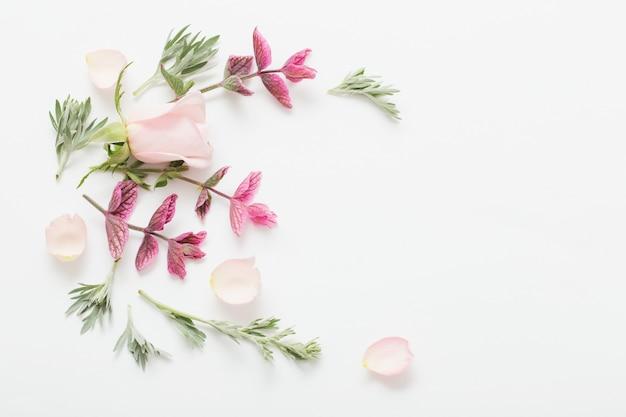 Plantes et fleurs sur blanc